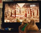 Vizio TV and Animal Planet (2)