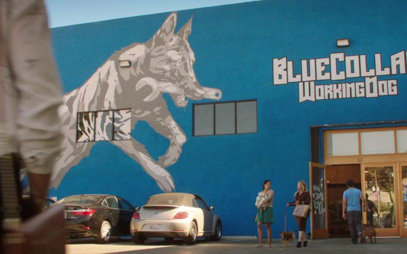 BlueCollar Working Dog in Dog Days (1)