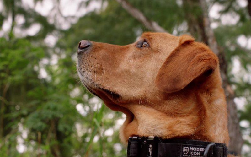 Modern Icon Dog Gear in Hawaii Five-0
